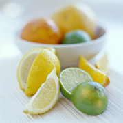 Orange Photos - Citrus Fruits by David Munns
