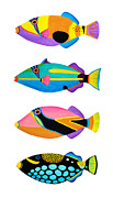 Triggerfish Paintings - Collection of trigger fishes by Opas Chotiphantawanon