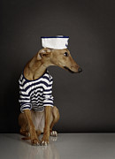 Sailor Prints - Dogs Print by Rainer Elstermann