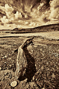 Steve Purnell Photo Metal Prints - Driftwood Metal Print by Steve Purnell