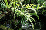 Bromeliads Photography - El Yunque National Forest by Thomas R Fletcher