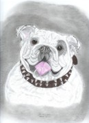 Terriers Drawings Prints - English Bulldog Print by Don  Gallacher