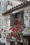 Red Geraniums Prints - Eze Print by Maureen J Haldeman