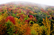 Winding Road Posters - Fall color along the Highland Scenic Highway Poster by Thomas R Fletcher