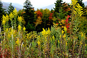 Autumn Scene Photos - Fall Color Highland Scenic Highway by Thomas R Fletcher