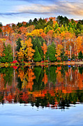 Shoreline Photos - Fall forest reflections by Elena Elisseeva