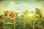 Agriculture Art - Field of colorful sunflowers and blue sky  by Sandra Cunningham