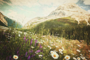Alberta Photo Prints - Field of daisies and wild flowers Print by Sandra Cunningham