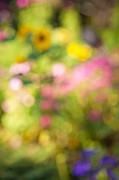 Blurs Prints - Flower garden in sunshine Print by Elena Elisseeva