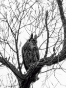 500mm Prints - Great Horned owl Print by Matt Steffen