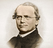 History Of Science Prints - Gregor Mendel, Father Of Genetics Print by Science Source