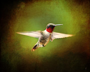 Tiny Bird Prints - Hummingbird in Flight Print by Jai Johnson