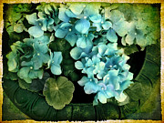 Transfer Digital Art Framed Prints - Hydrangea Framed Print by Jessica Jenney