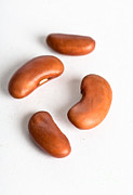 Consume Prints - Kidney Bean Print by Photo Researchers, Inc.