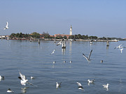 Italie Photos - Lagoon. Venice by Bernard Jaubert