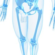 Human Joint Digital Art - Leg Bones, Artwork by Sciepro
