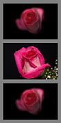 Floral Triptych Posters - 3 Little Roses Poster by Michael Waters