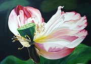 Lotus Leaves Paintings - Lotus by Yap Chew yee