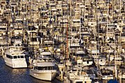 Docked Sailboats Prints - Marina Print by Jeremy Woodhouse