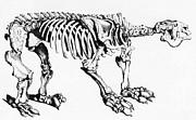 Megatherium, Extinct Ground Sloth Print by Science Source