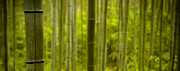 Bamboo Forest Framed Prints - Mystical Bamboo Framed Print by Sebastian Musial