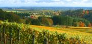 Wine Country Digital Art Prints - Oregon Wine Country Print by Margaret Hood