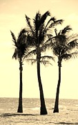 Ocean Scenes Digital Art Framed Prints - 3 PALMS in SEPIA Framed Print by Rob Hans