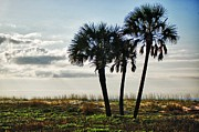 Alabama Framed Prints - 3 Palms on the Beach Framed Print by Michael Thomas