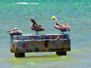 Key West Mixed Media - 3 Pelicans by David  Van Hulst
