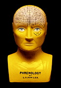 Traits Prints - Phrenology Bust Print by Mark Sykes