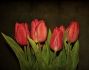 Tulips - Pink Tulips by Cathie Tyler