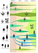 Division: Pinophyta Prints - Plant Evolution, Diagram Print by Gary Hincks