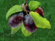 Plum Framed Prints - Plums Framed Print by Manfred Lutzius