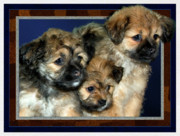 Puppies Digital Art Prints - 3 Pups Print by Harry Hunsberger