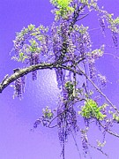 Holly Martinson - Purple passion wisteria
