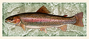 Lake Trout Posters - Rainbow Trout Poster by John Stephens