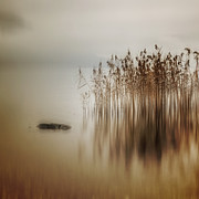 Blur Prints - Reed Print by Joana Kruse