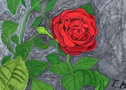 Rose Drawings Prints - Rose Print by Isaac Mullens