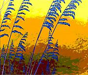 Oats Digital Art Posters - Sea Oats Poster by Blaine Filthaut