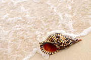 Caribbean Island Prints - Seashell and ocean wave Print by Elena Elisseeva