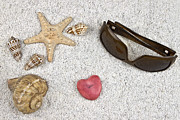 Amour Photos - Seastar And Shells by Joana Kruse