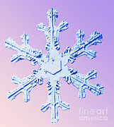 Micrograph Art - Snow Crystal by National Snow and Ice Data Center
