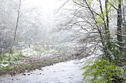 Williams Photos - Spring Snow along Williams River by Thomas R Fletcher