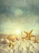 Beach Shell Sand Sea Ocean Art - Starfish and seashells  at the beach by Sandra Cunningham