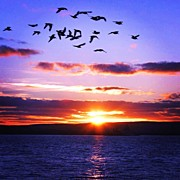 Birds Art - Sunset by Luisa Azzolini