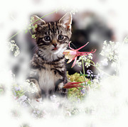 Animal Portraiture Framed Prints - Tabby Kitten Framed Print by Jane Burton