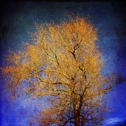 Bare Trees Posters - Textured tree Poster by Bernard Jaubert