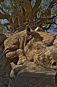 Rhinoceros Originals - Tree Of Life HDR by Jason Blalock