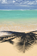Palms Photo Posters - Tropical beach Poster by Elena Elisseeva