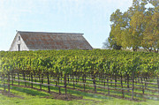Winemaking Framed Prints - Vineyard with Old Barn Framed Print by Brandon Bourdages